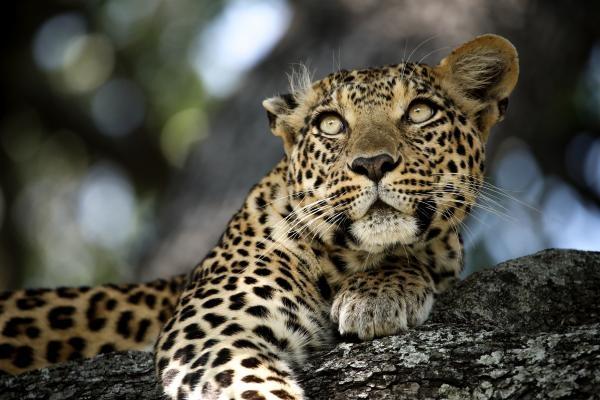 Dokument Proměny Okavanga