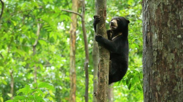 Borneo - prastarý ostrov