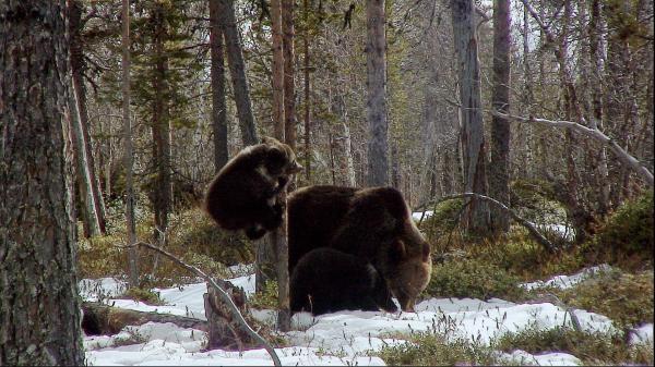 Dokument Krásy divokého Norska
