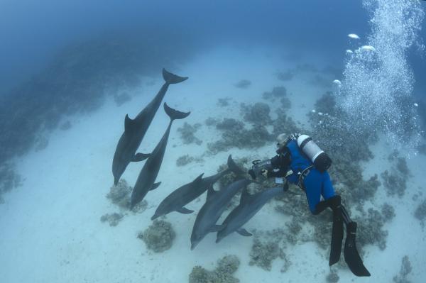 Mezi delfíny